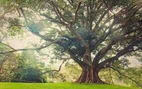 photo tree huge.jpg