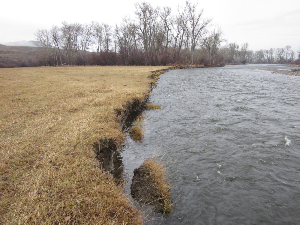 Before - the river was easily eroding the bank and the landowner was rapidly losing his pasture