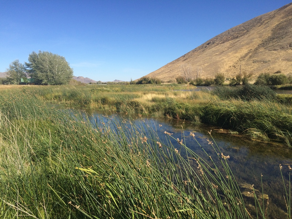 A wide variety of wetland plants along the creek in Idaho for wildlife habitat restoration