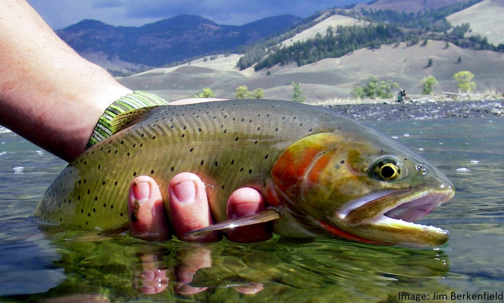 cutthroat trout habitat restoration