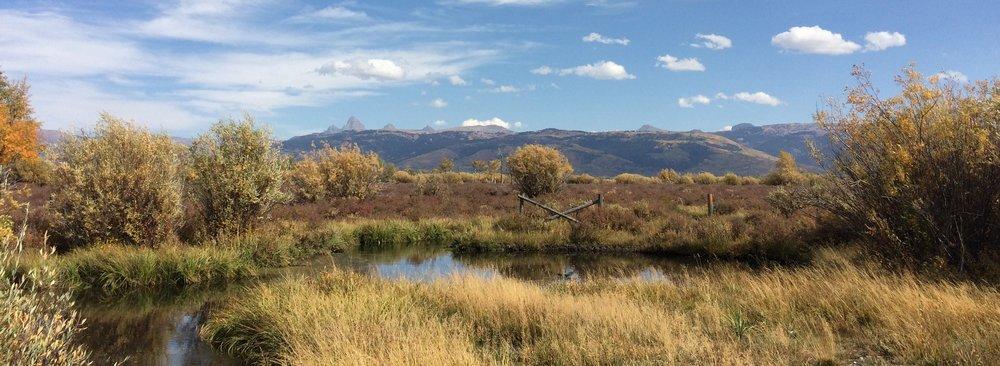 wetland restored by environmental consulting firm intermountain aquatics