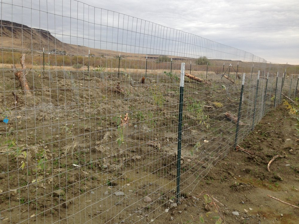 3) Deer fencing. Some upland areas were fenced with welded wire to prevent deer browsing. Other areas were left unfenced in an attempt to quantify the effect of fencing on plant survivorship.