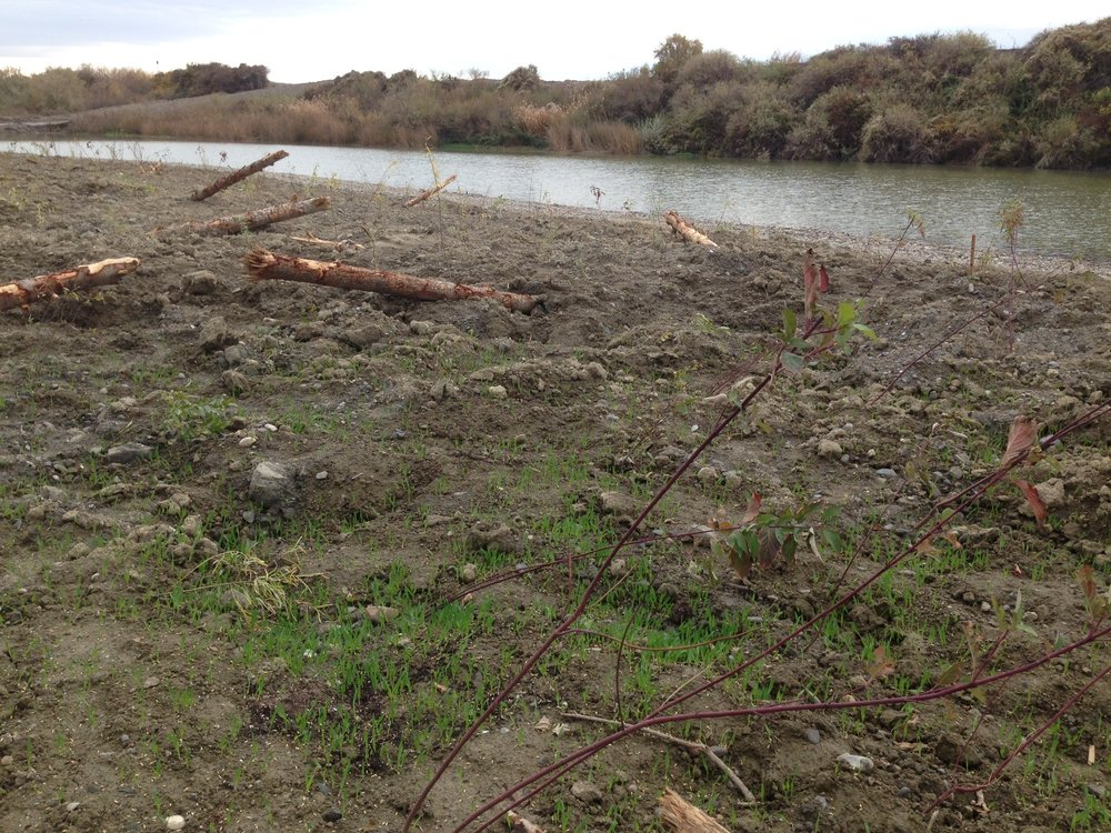 Planted areas were seeded before winter to prevent further soil erosion in spring floods.