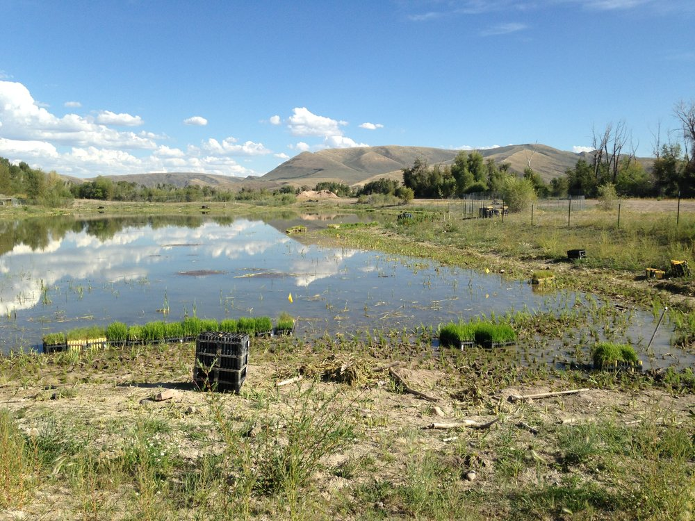 Completed revegetation around ponds for wildlife habitat restoration