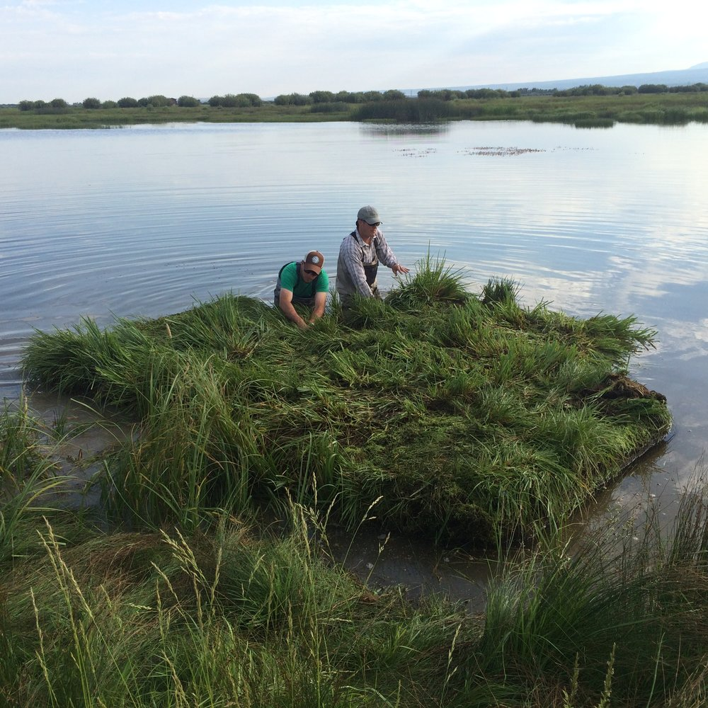 Launching a vegetated floating island to improve wildlife habitat