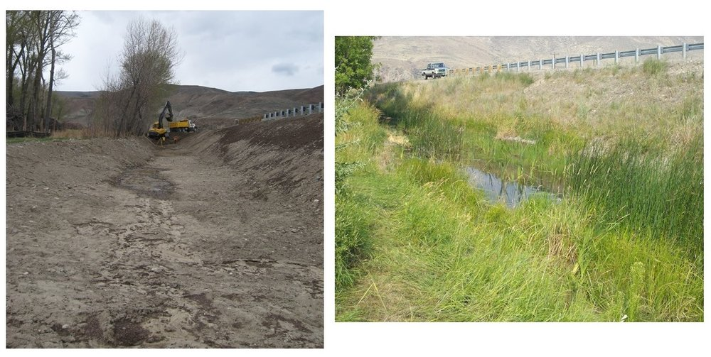 Before and after wildlife habitat restoration