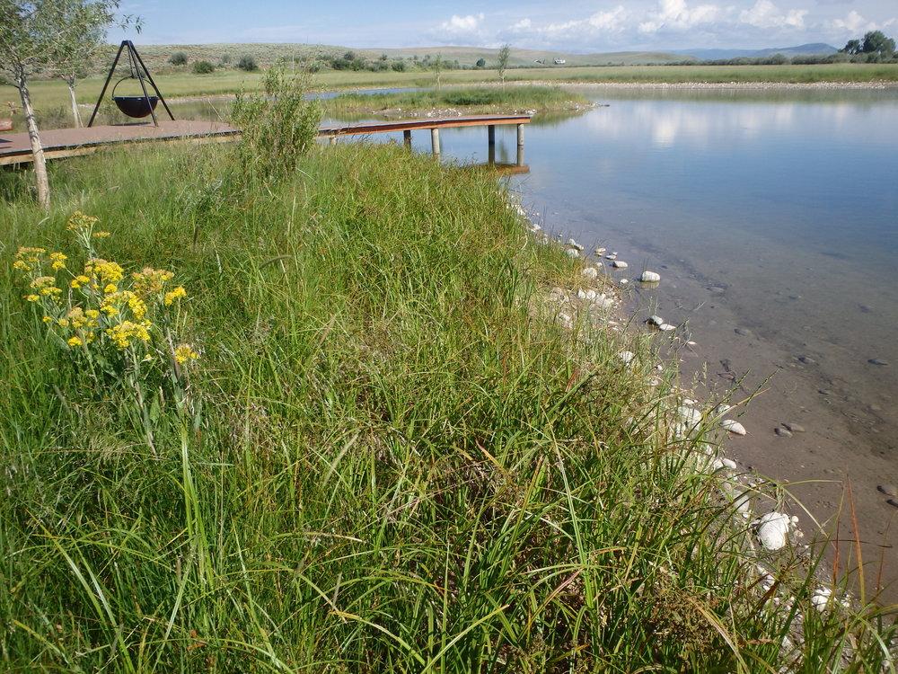 pond restoration in wyoming