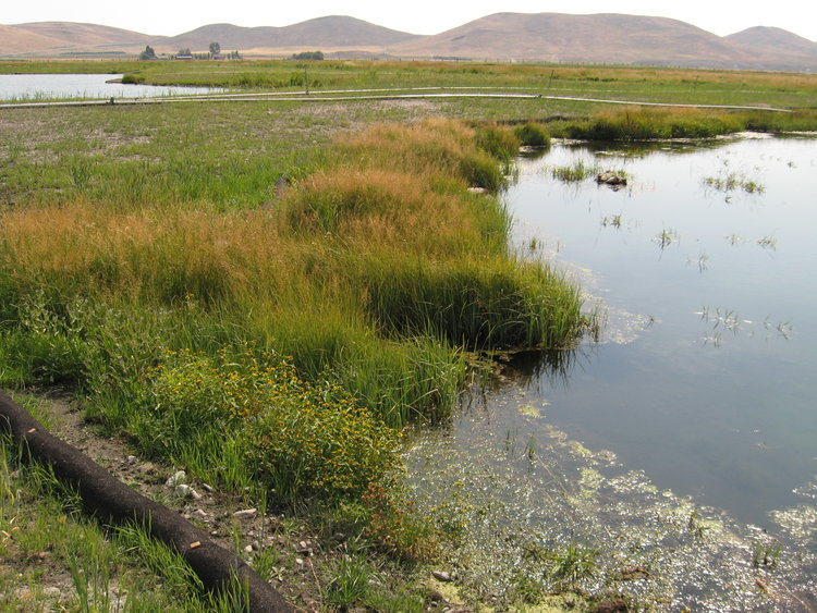 wildlife habitat restoration in Idaho