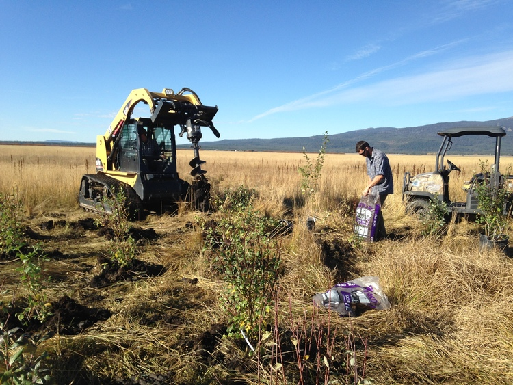 wildlife habitat restoration on Jesse Creek