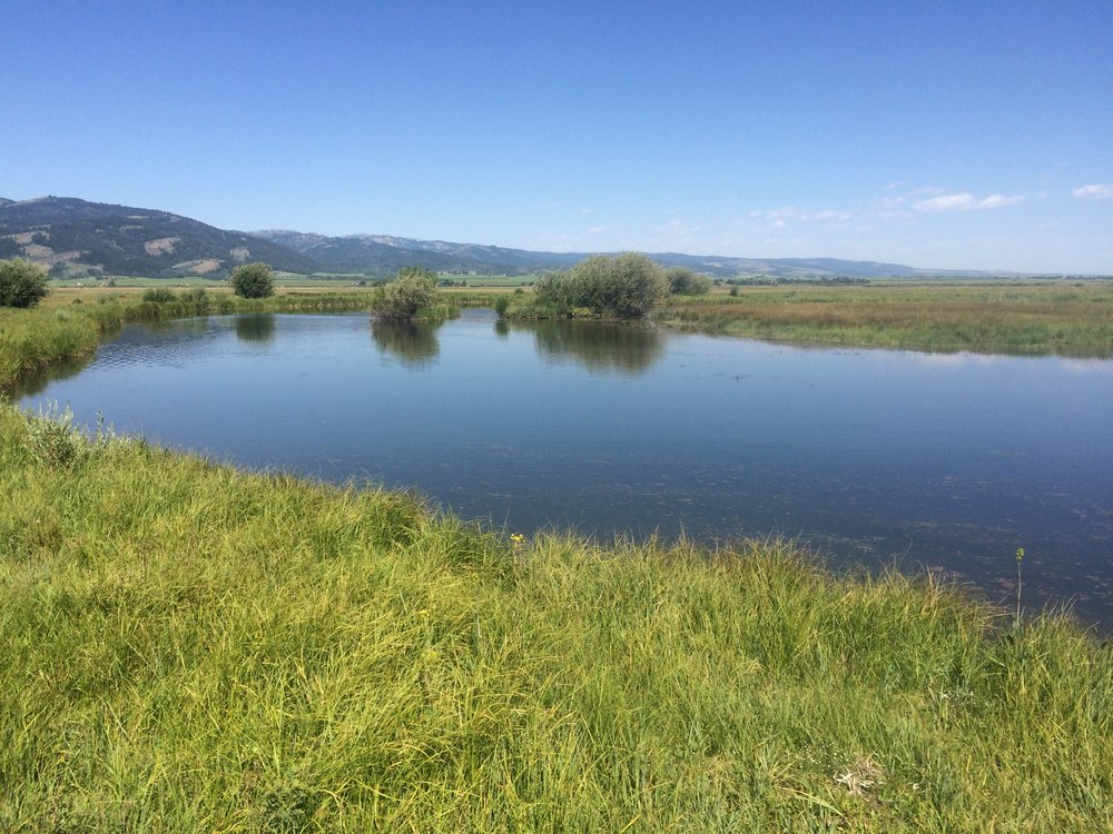 habitat restoration along teton river