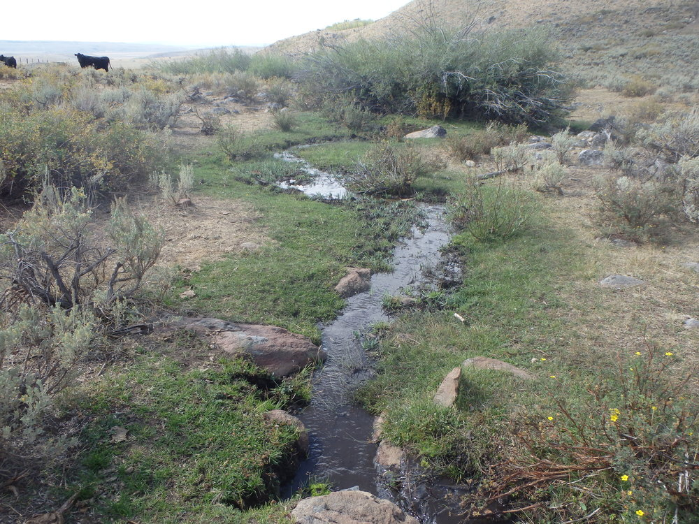 habitat restoration on creek corridor