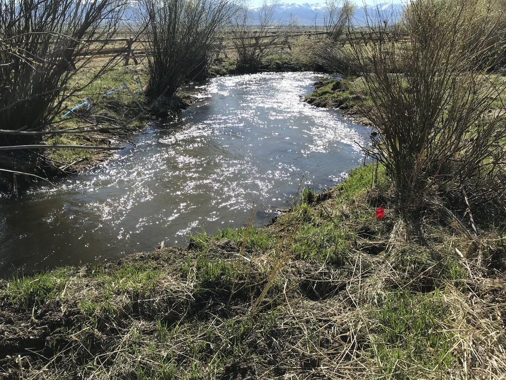 New channel utilizing existing willows and herbaceous wetland vegetation