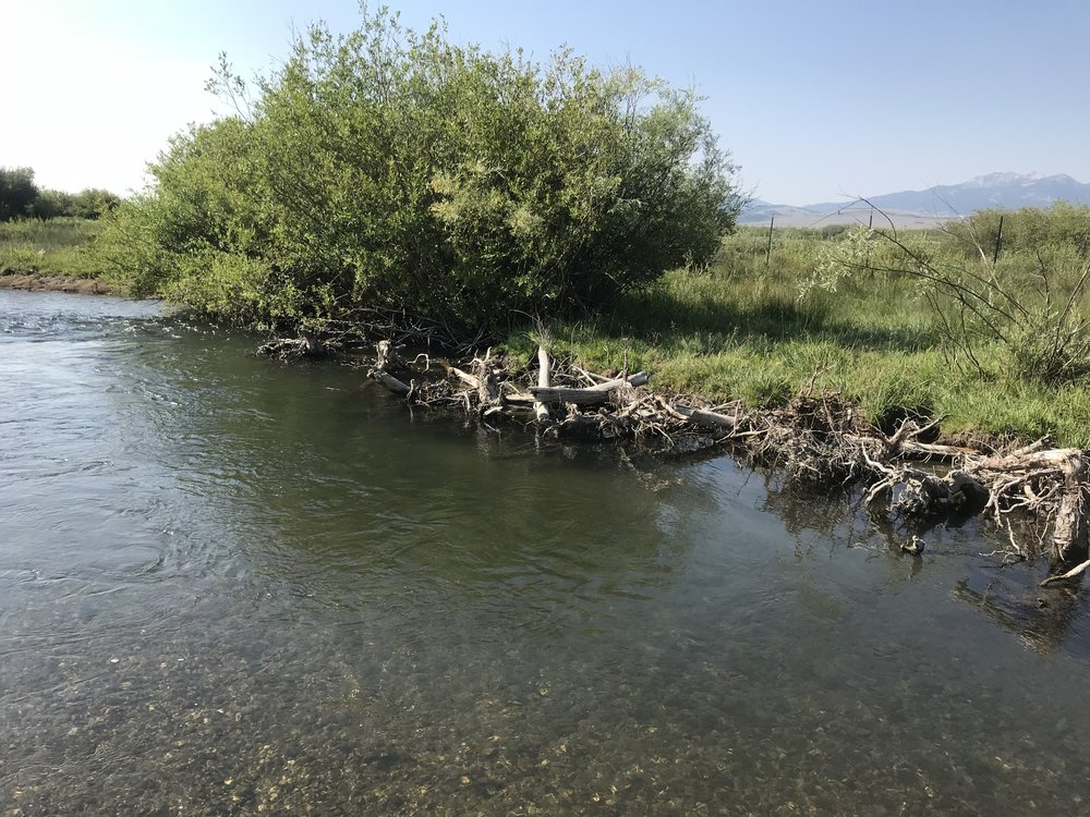 River is re-located to utilize existing willows, large woody debris provides bank stability, scour, and habitat