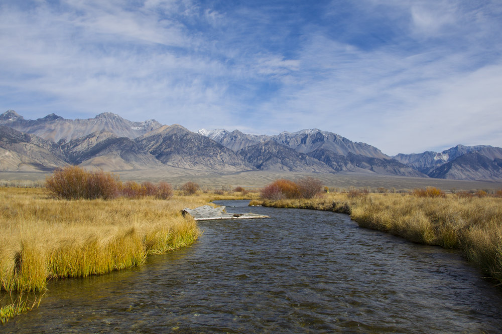 We can help you - Build a trout pond | Repair stream bank erosion | Improve stream habitat and fishing | Increase hunting and bird habitat | Restore native plants | Develop in wetlands | Navigate Teton Co. WY environmental regulations | Acquire a conservation easement | Design a septic system for high groundwater areas | Control noxious weeds