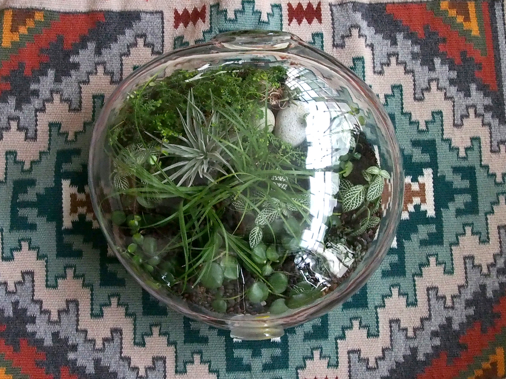Crooked Nest Terrarium made by and image courtesy of Crooked Nest