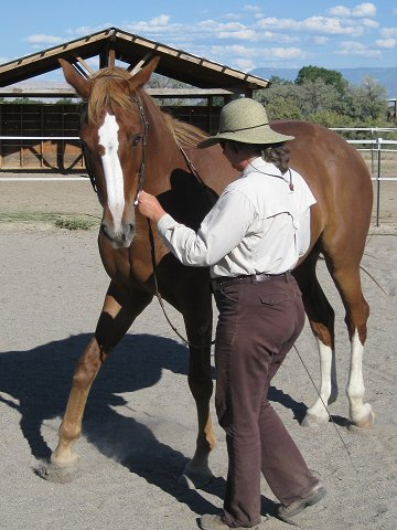 position for inhand lateral work front view.jpg