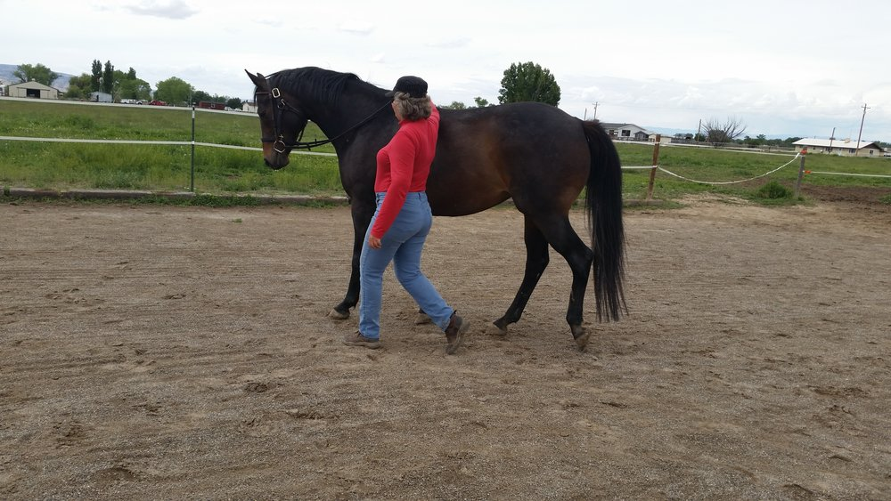 Working with Coco several years ago. Trotting in hand.