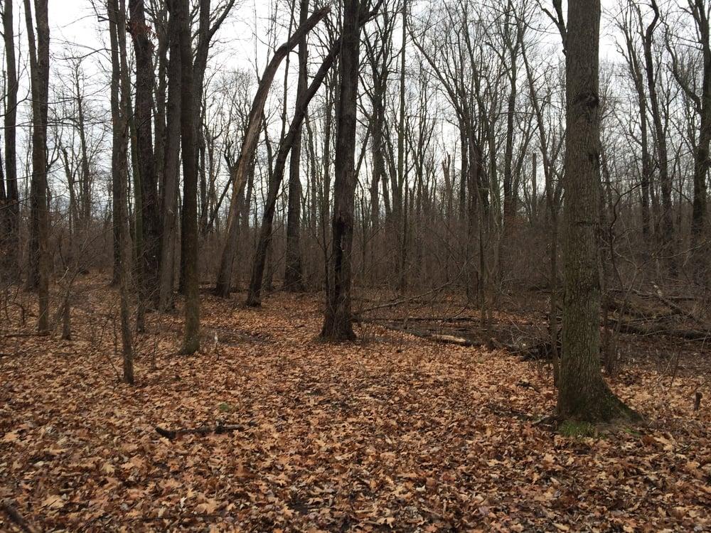 forest_Dec15.JPG