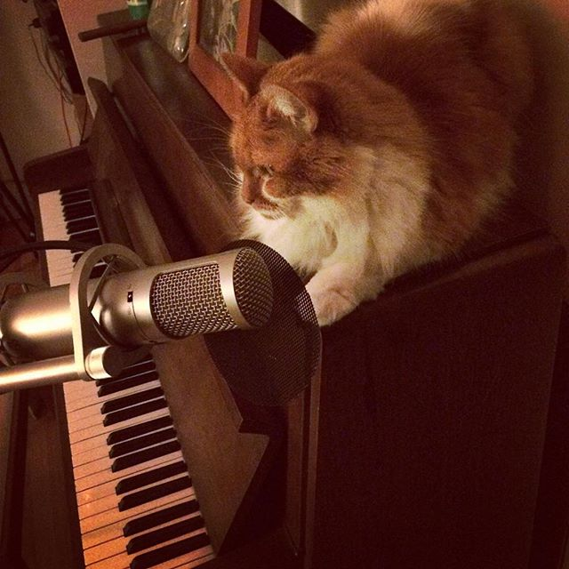 And they say SING US A SOOOOOOOOONG PIANO CAT #cattyjoel2016 @i.am.mle