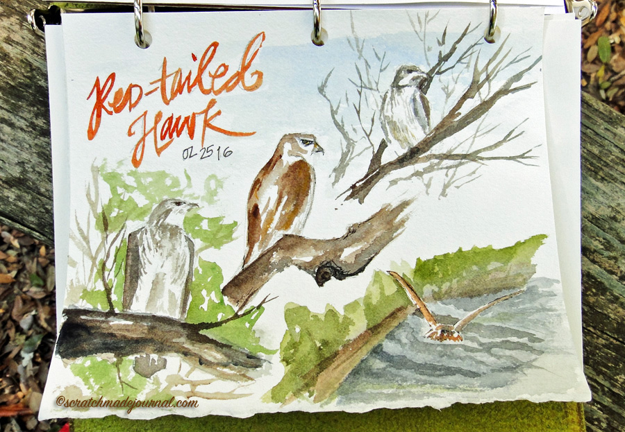 red tailed hawk watercolor sketch - scratchmadejournal.com