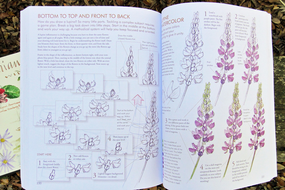 Laws Guide on drawing flowers - scratchmadejournal.com