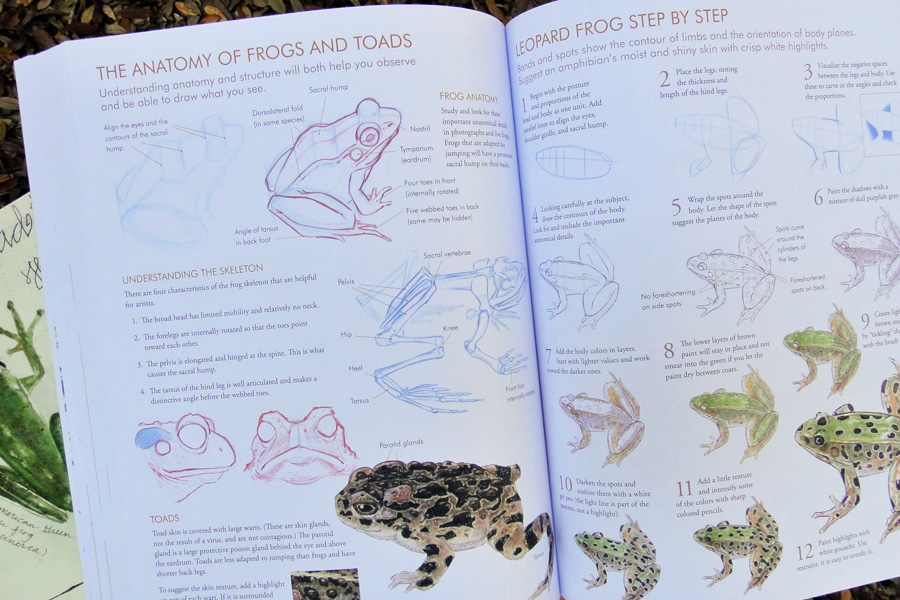 Laws Guide to drawing frogs - scratchmadejournal.com