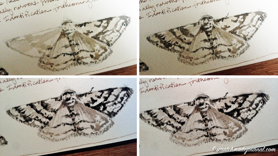 moth stages of watercolor nature journaling - scratchmadejournal.com
