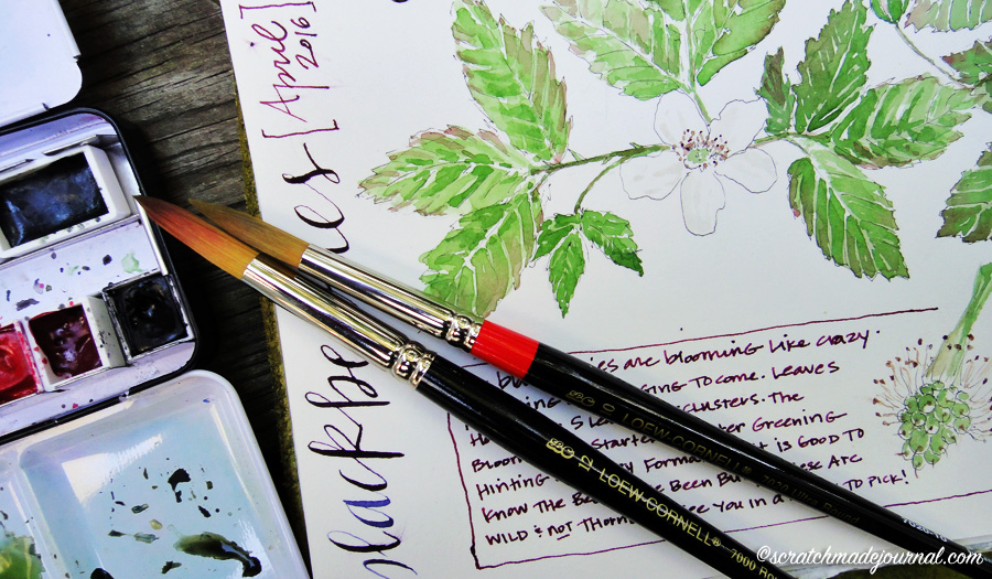 Loew Cornell brush watercolor blackberries ©scratchmadejournal.jpg