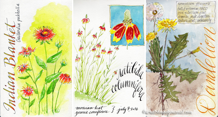Wildflower watercolor nature journal sketches - scratchmadejournal.com