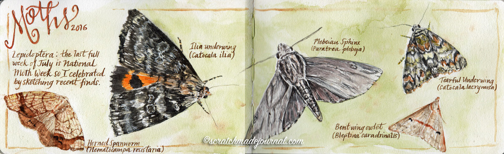 Lepidoptera moths watercolor sketches - scratchmadejournal.com