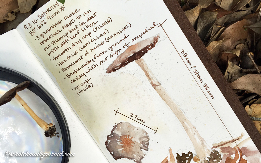 Mushroom nature study & field sketches - scratchmadejournal.com