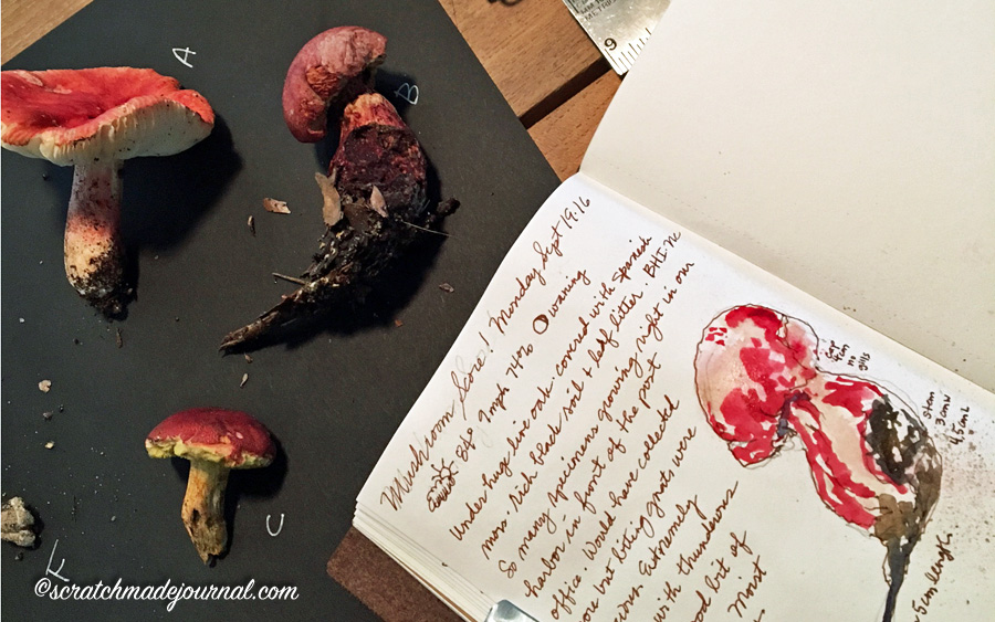 Tips on observing & studying mushrooms - scratchmadejournal.com
