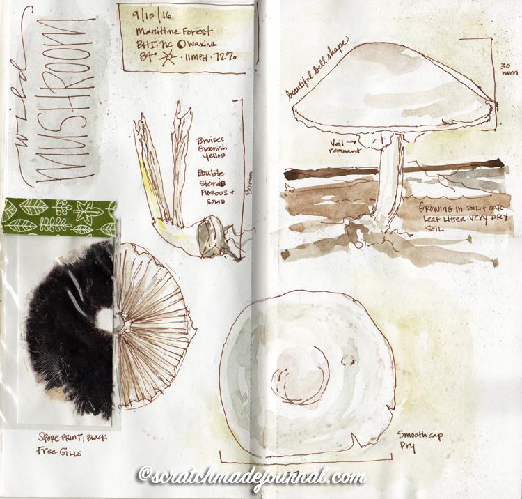 mushroom sketches 2.jpg