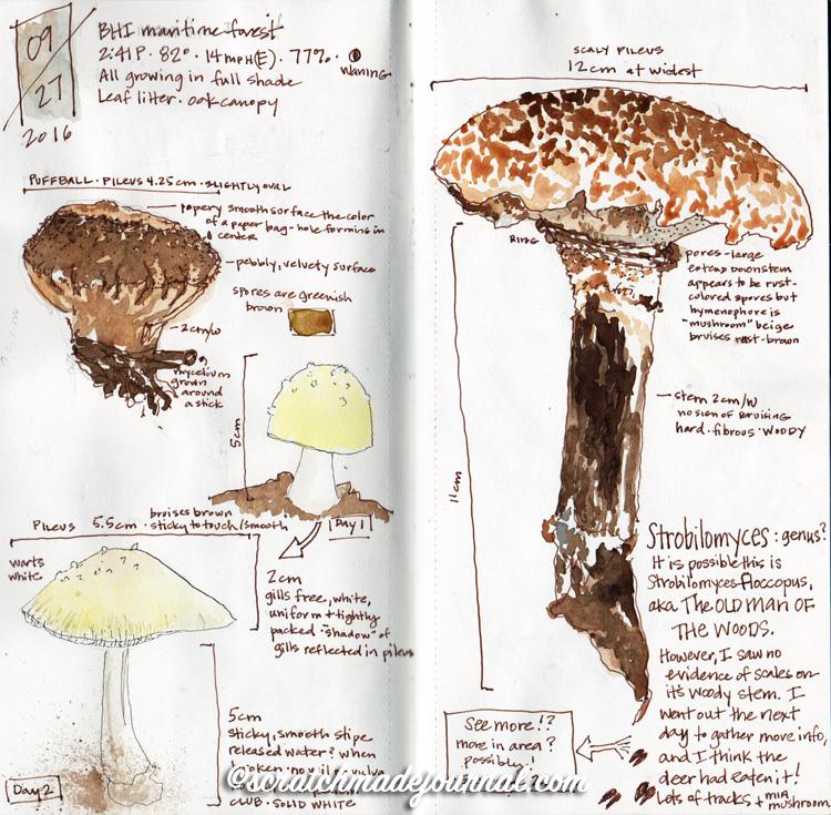 mushroom sketches 3.jpg