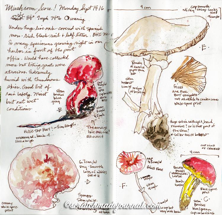 mushroom sketches 4.jpg