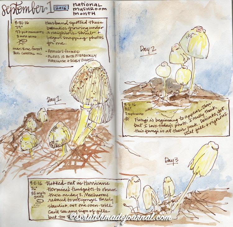 mushroom sketches 5.jpg