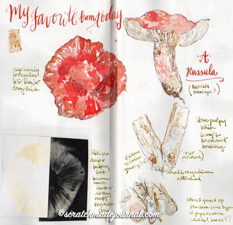 mushroom sketches 6.jpg