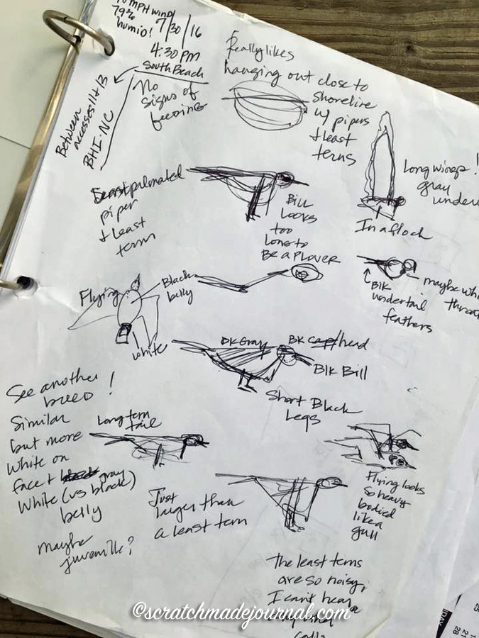 Really fast and messy field notes & sketches, but very useful for later identification!