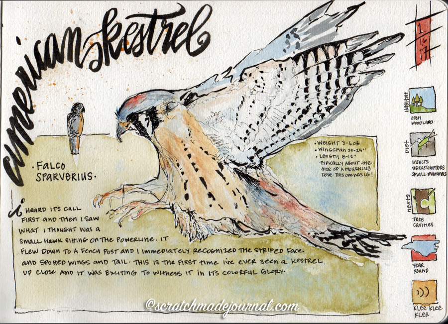 American Kestrel journaling page plus on keeping a bird watching journal - scratchmadejournal.com
