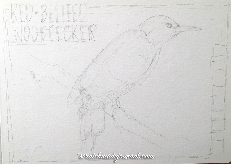 Red-bellied woodpecker sketch 1 ©scratchmadejournal.jpg