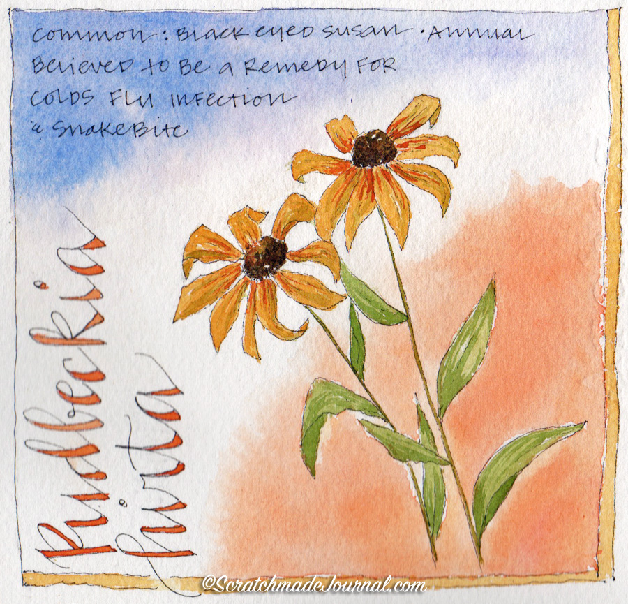 Black Eyed Susan sketch: Comparing & mixing yellow ochre watercolors plus a free mixing chart - scratchmadejournal.com