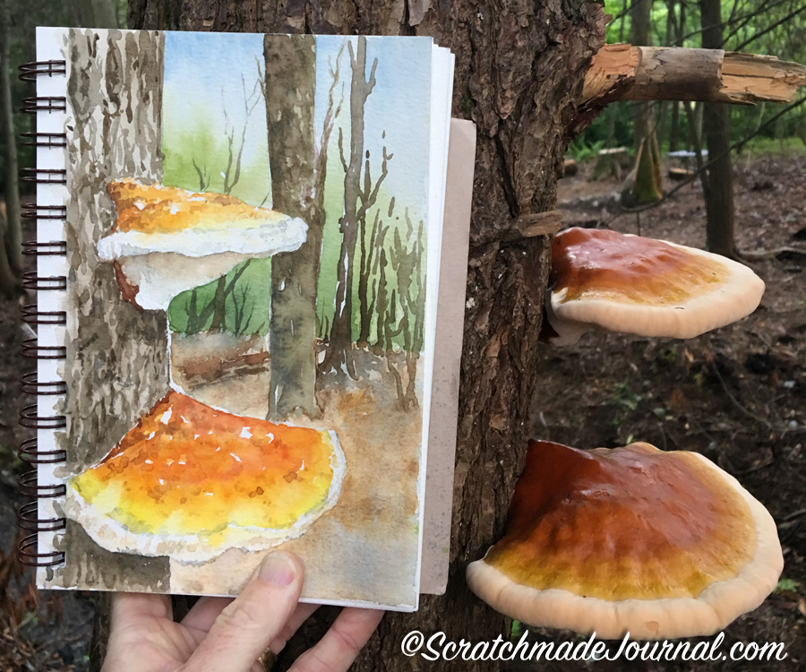 Watercolor study sketch of Ganoderma tsugae fungi - ScratchmadeJournal.com