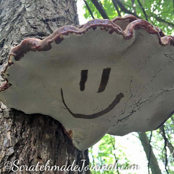 Ganoderma tsugae - ScratchmadeJournal.com