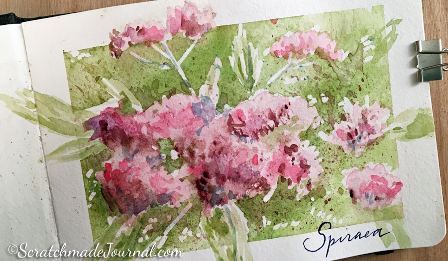 Spirea pink flower watercolor sketch in a Hahnemühle Watercolour Book - ScratchmadeJournal.com