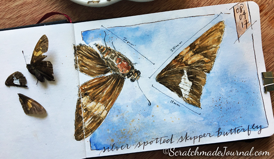 Skipper butterfly watercolor sketch in my Hahnemühle nature journal - ScratchmadeJournal.com