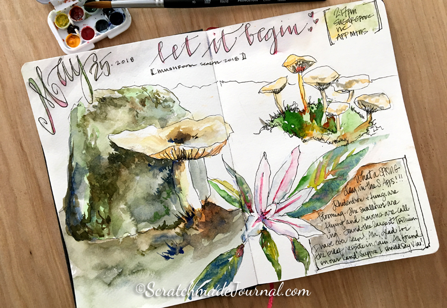 Mushroom mycology nature journal watercolor sketches - ScratchmadeJournal.com