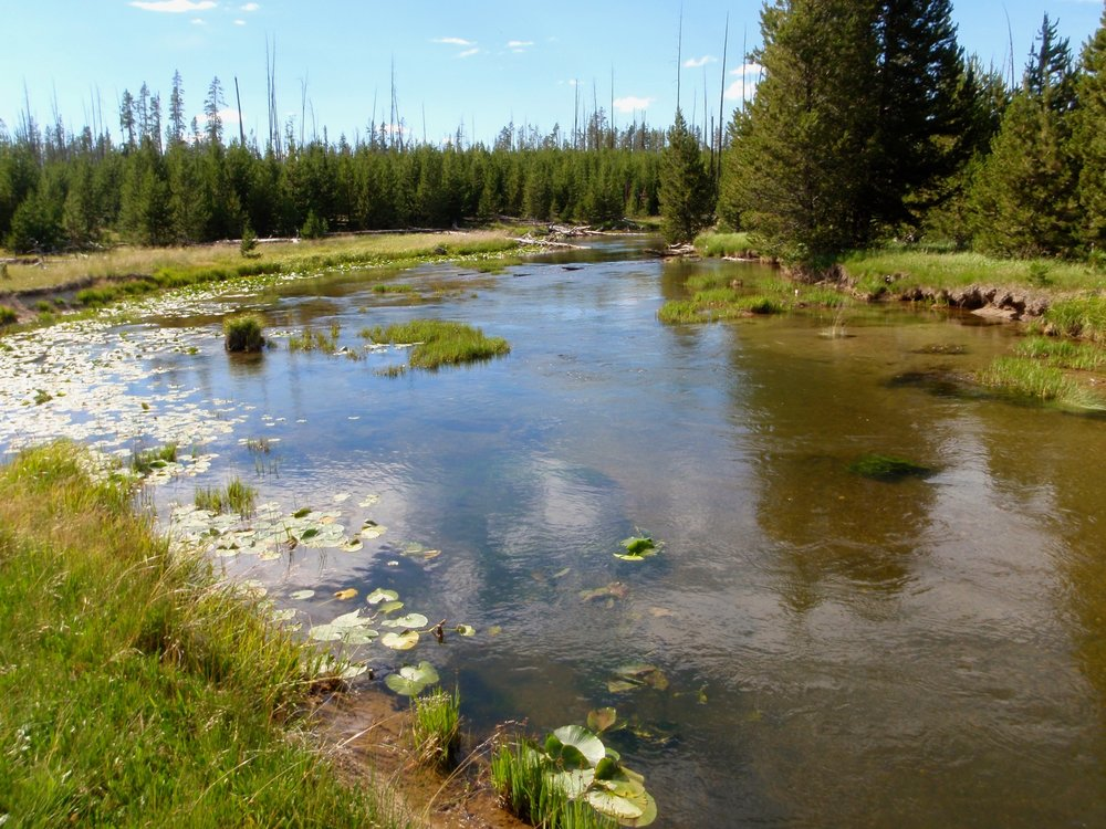 Gibbon River, Yellowstone National Park.  With all those lily pads you would swear it contains panfish and bass, not trout and grayling!