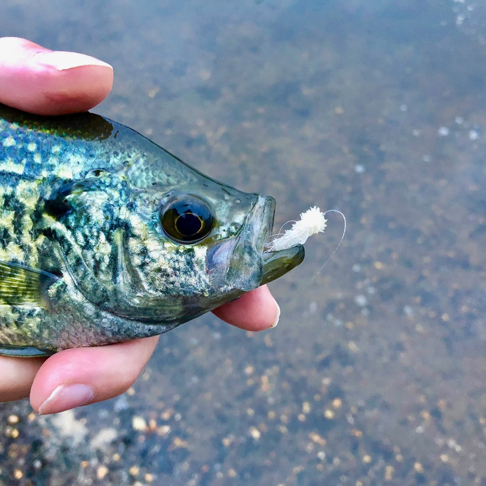 Crappies are a big fan of the Ghost version of the James Wood Bucktail