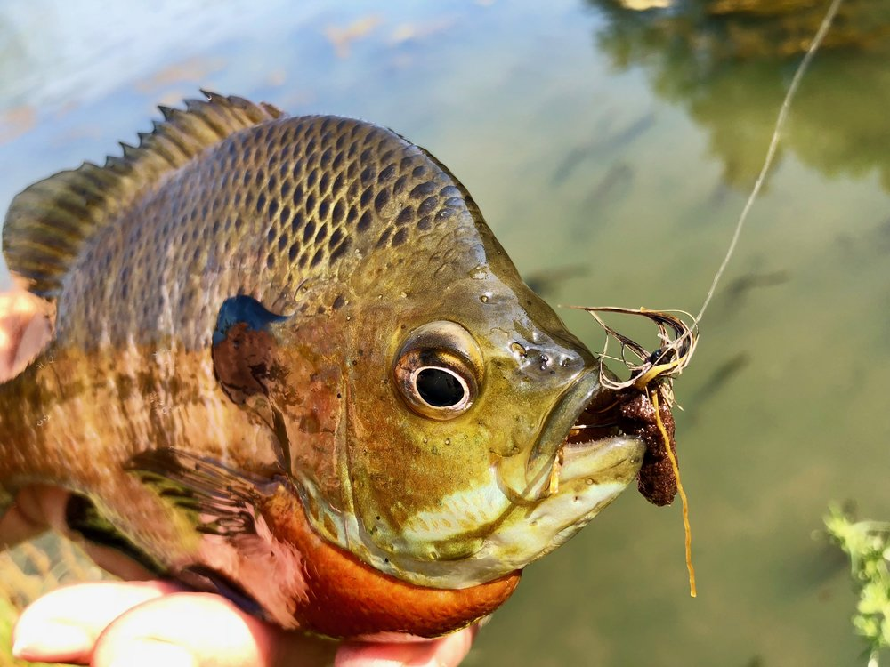 Bluegills are particularly fond of this pattern.