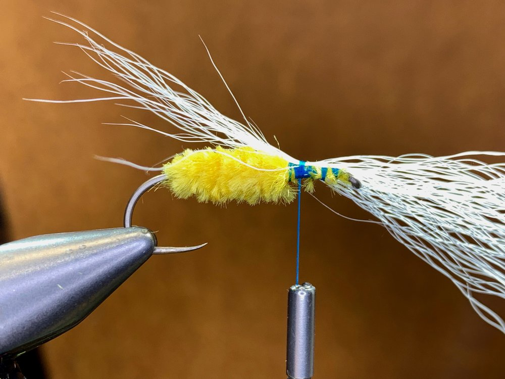 Step 5 - Cut small clump of white hairs from a bucktail. Even the tips and pull out any underfur and short fibers. 25-30 fibers is more than enough. This wing is tied very sparse.Tie in the bucktail with the tips extending rearward in front of the chenille with several loose wraps.